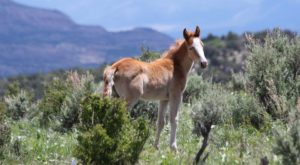 The Breathtaking Park In Colorado Where You Can Watch Wild Horses Roam