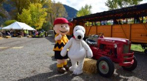 The Pumpkin Patch Train Ride In Washington That's Perfect For A Fall Day
