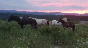 The Breathtaking Campground In West Virginia Where You Can Watch Wild Horses Roam