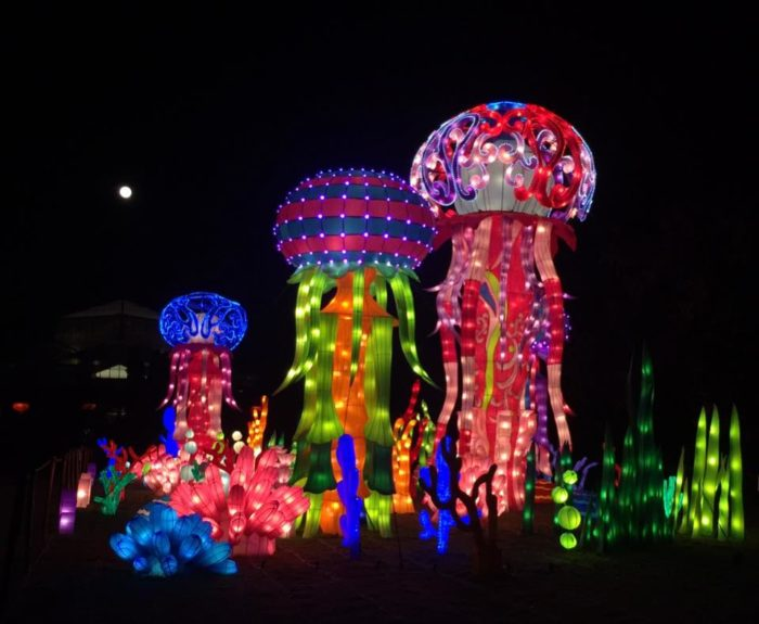 deemed the wild more than 800 handmade lanterns fill the 12 acre garden showcasing life size and sometimes larger displays of animals from all seven