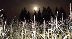2 Haunted Corn Mazes in Portland That Will Give You Goosebumps
