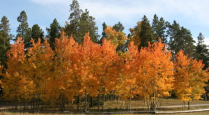 Here Are The Best Times And Places To View Fall Foliage In Wyoming