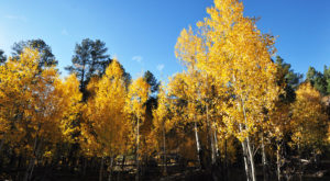 7 Short And Sweet Fall Hikes In Arizona With A Spectacular End View