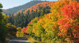 Here Are 12 Ways You Know It's Fall In Utah