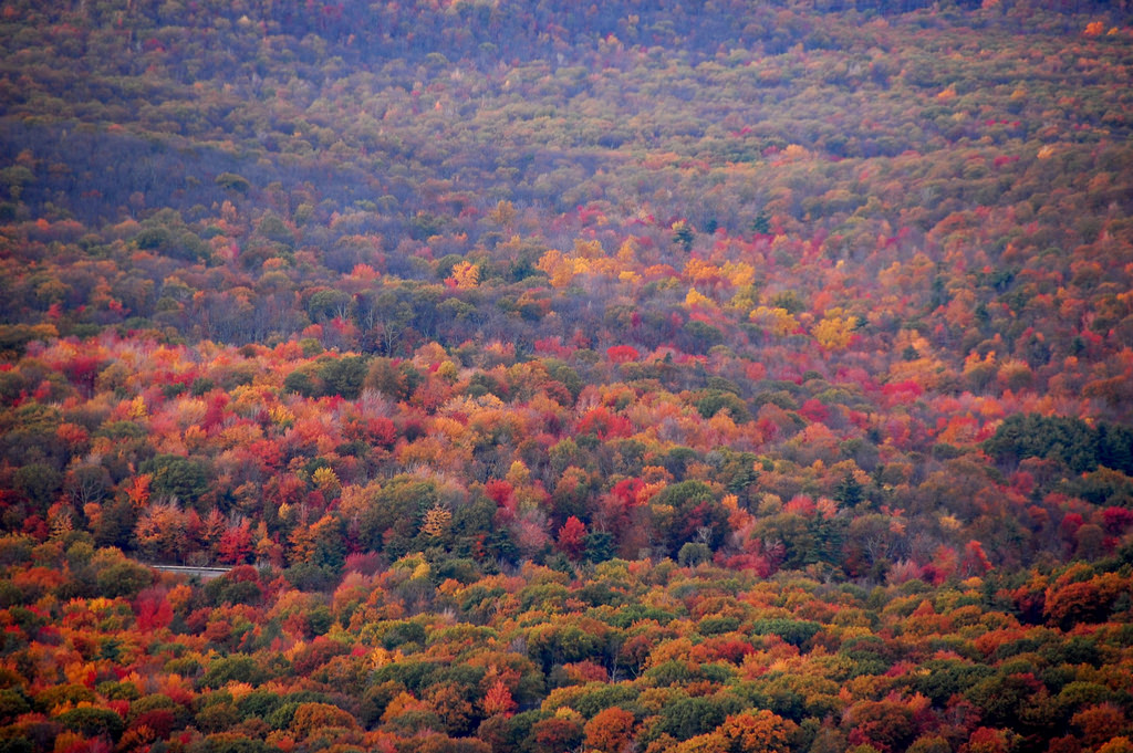 When And Where To View Fall Foliage 2017 In Pennsylvania