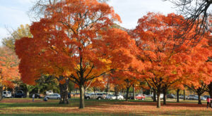 Here Are The Best Times And Places To View Fall Foliage In DC