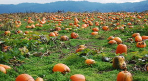 These 12 Charming Pumpkin Patches In Oregon Are Picture Perfect For A Fall Day