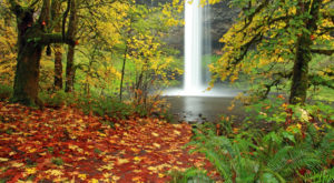 10 Magical Waterfalls Await You At This Park Near Portland