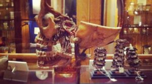 The Museum Of Medical Oddities In Philadelphia Is Not For The Faint Of Heart