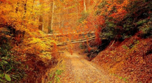 20 Photos That Prove Fall In Tennessee Is Like Nowhere Else In The World