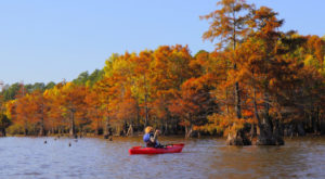 Here Are The Best Times And Places To View Fall Foliage In Louisiana