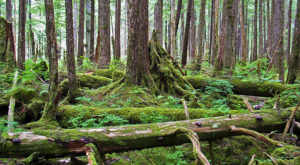 Follow This Enchanting Trail Through Alaska's Rainforest For An Unforgettable Experience