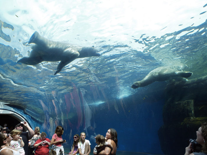 pittsburgh zoo ppg aquarium this underwater tunnel in