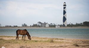 The Breathtaking Park In North Carolina Where You Can Watch Wild Horses Roam