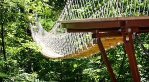 7 Tree-Top Tours You Should Take In Illinois Before Winter Comes