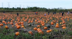 These 6 Charming Pumpkin Patches In Chicago Are Picture Perfect For A Fall Day