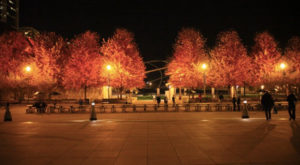 Here Are The Best Times And Places To View Fall Foliage In Chicago