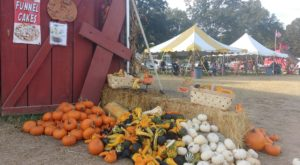 7 Picture Perfect Fall Day Trips To Take Around Charlotte