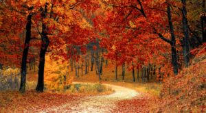 Here Are The Best Times And Places To View Fall Foliage In Illinois