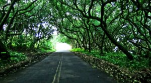 The Dreamy Country Road In Hawaii You'll Want To Explore