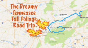 This Dreamy Road Trip Will Take You To The Best Fall Foliage In All Of Tennessee
