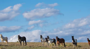 The Breathtaking Park In South Dakota Where You Can Watch Wild Horses Roam