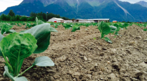 The Gorgeous U-Pick Farm In The Alaskan Countryside You Have To Visit At Least Once