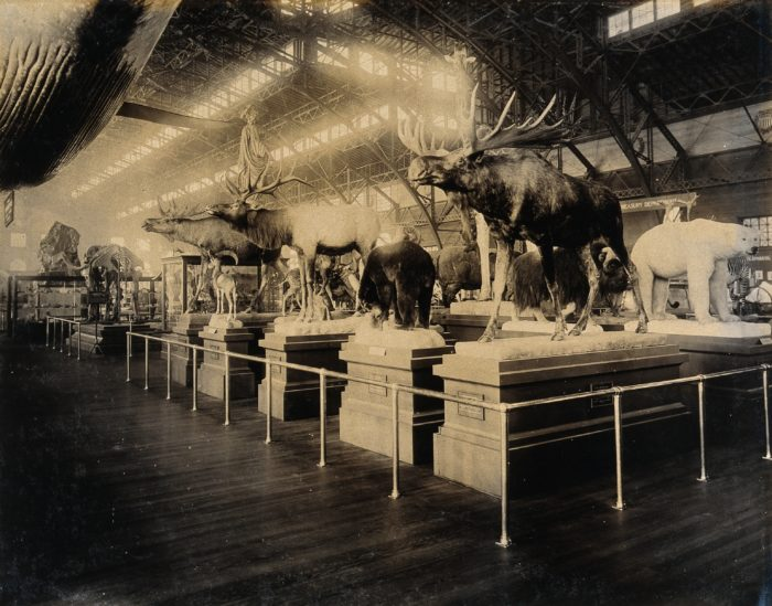 Classroom Library Design ~ Rare photos from st louis during the world s fair