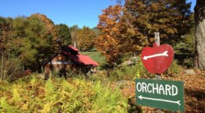 These 10 Charming Apple Orchards In New Hampshire Are Picture Perfect For A Fall Day