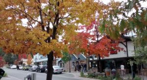 Here Are The Best Times And Places To View Fall Foliage In Southern California