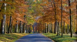 Here Are The Best Times And Places To View Fall Foliage In Maryland
