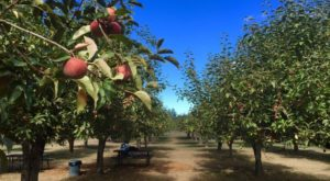These 6 Charming Apple Orchards In Northern California Are Picture Perfect For A Fall Day
