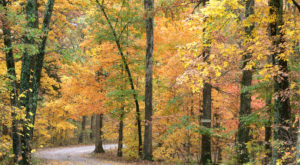 Here Are The Best Times And Places To View Fall Foliage In Missouri