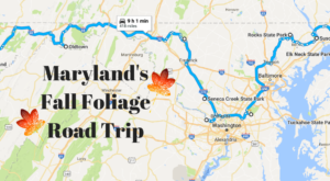 This Dreamy Road Trip Will Take You To The Best Fall Foliage In All Of Maryland