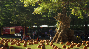 The Pumpkin Patch Train Ride In Alabama That's Perfect For A Fall Day