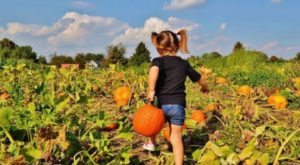 10 Harvest Festivals In New Jersey That Will Make Your Autumn Awesome