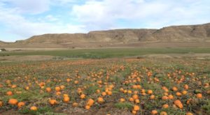 These 6 Charming Pumpkin Patches In Wyoming Are Picture Perfect For A Fall Day