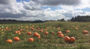 These 8 Charming Pumpkin Patches Near Louisville Are Picture Perfect For A Fall Day