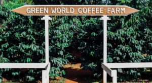You'll Want To Visit This Hawaii Coffee Farm Hiding In Plain Sight