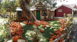 The Pumpkin Patch Train Ride In Southern California That's Perfect For A Fall Day