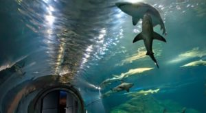 This Underwater Tunnel In New Jersey Will Enchant You In The Best Way Possible