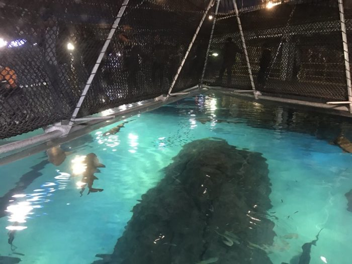 New Jersey Has An Underwater Shark Tunnel At Adventure