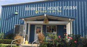 The Delightful Honey Farm In Southern California That Everyone Should Experience At Least Once