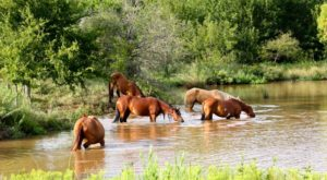 The Breathtaking Place In Oklahoma Where You Can Watch Wild Horses Roam