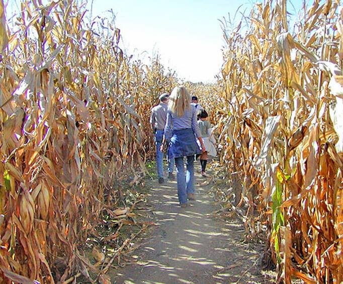 8 Best Corn Mazes In Oklahoma To Visit This Fall