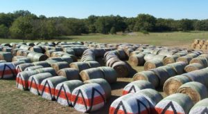 A Visit To Oklahoma's Largest Hay Maze Is The Perfect Way To Spend A Fall Day