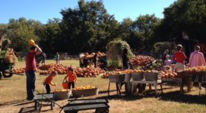 If You Only Visit One Pumpkin Patch In Oklahoma This Fall, Make It This One