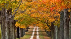 The One Town Near Boston Everyone Must Visit This Fall