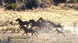 The Breathtaking Place In Oregon Where You Can Watch Wild Horses Roam