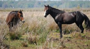 The Breathtaking State Park In Florida Where You Can Watch Wild Horses Roam